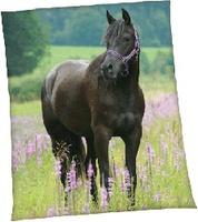 """Сувениры Плед флисовый Peli """"Вороная лошадь"""""""