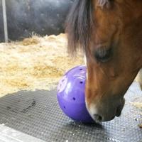 Игрушки для лошадей Шар игровой для снэков LIKIT